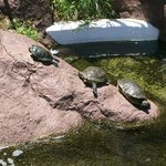 turtles on the grounds too
