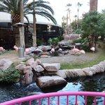Lago com Flamingos
