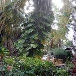 Lush vegetation throughout resort