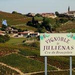 le Raisin Bleu au coeur du vignoble de Julienas