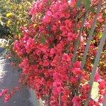 Санта-Флавия в цвету.