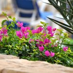 Lively flora to spruce up the grounds