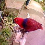 Всем приходящим в парк предлагают сфотографироваться с попугаями. Фото можно купить на выходе, н
