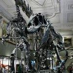 The dinosaurs inside