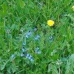 estensioni di pascoli e prati con fiori di campo