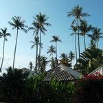i bungalow e le palme