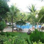 belle piscine dans le beau jardin
