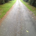 Tree lined Avenue to Whitehill Country House