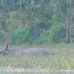 Rhino on jungle walk