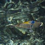 verschiedene Fischarten in wunderschöner Farbpracht