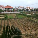 Мандариновый сад под окнами отеля