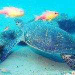 Turtle in Ponta