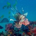 Firefish and ray at Ponta