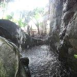 Magnifique reconstitution d'une forêt tropicale