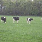 Pastures near B&B