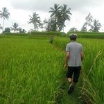 A walk through the field
