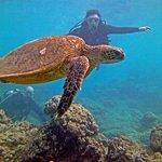 Eliza & John dive Hanauma Bay with a Turtle!