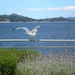 A seagull on our hotel terrace and the view...