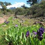 Nature around the campground
