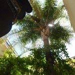 een palmboom zorgt voor nodig schaduw in binnentuin