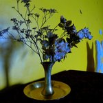 flowers for in the room