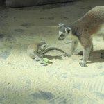 Zoo Wien