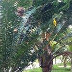 nel curatissimo giardino...palme abitate!