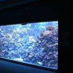mais aquários