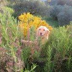 Ruby in the garden