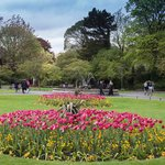 St. Stephen's Green (park) is across the street from the Fitzwilliam hotel