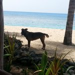 Cute dog that roams beach