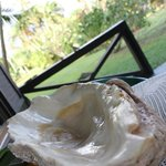 giant clam shell we found