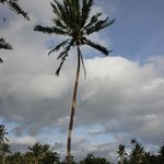 Palm trees!!!