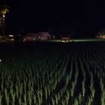 view of the rice paddy that backs the restaurant with mood lighting at night