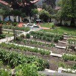 Beautiful Well Maintained Garden