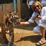 Feeding the tiger some chicken....ended up with all my 10 fingers too!