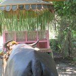 On the carabao cart ride