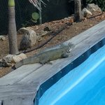 Onze grote vriend die iedere dag het zwembad opeiste ;)