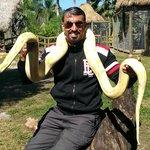 Anaconda Albina (incluido no pacote)