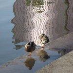 Ducks at Mirror Lake