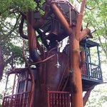 L'arbre aux oiseaux