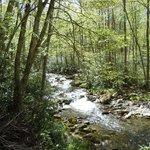Smoky Mountain river trail!