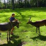 Meeting the deer