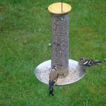 Birds feeding in Garden of Clayhill house