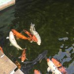 Lovely fishes in the ponds