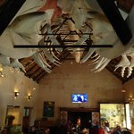 Whale skeleton in the selling