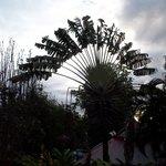 Végétation surprenante