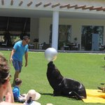 Sea Lion show on the lawn