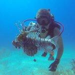 Lionfish...eradicated