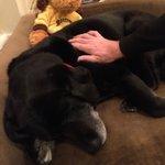 Canine ambassador Cate